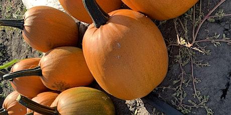 Pumpkin Fun Day at The Jungle Farm tickets