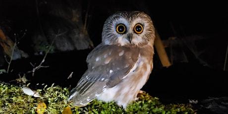 Pedder Bay Owl Banding Station Visits tickets