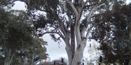 Majestic River Red Gum Dreaming tickets