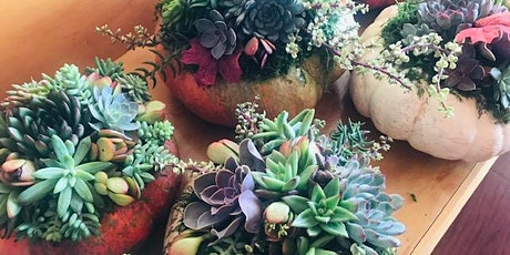 Succulent Pumpkin Workshop with  Artful Succulents & Mantra Coffee Company tickets