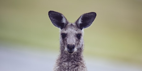 NaturallyGC- Great Southern Bioblitz Flora and Fauna Walk tickets