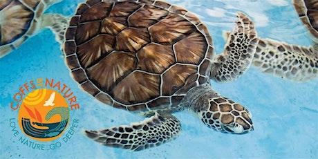 Coffs By Nature - Sea Turtle Walk tickets