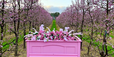 ECU Student Guild goes to S & R Orchards Cherry Blossom Festival tickets