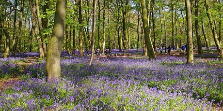 NHS EVENT: Woodland Practical Conservation tickets