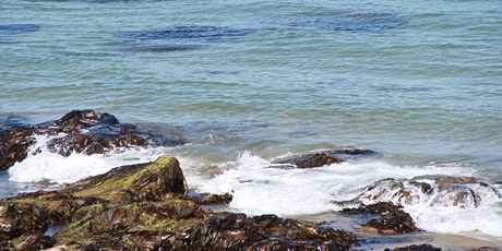 Seaweed foraging and identification tickets