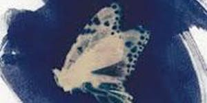 Blueprint of nature: Butterflies and the cyanotype