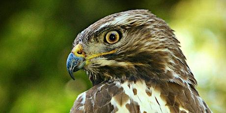 Autumn Bird of Prey Photography: Stoke Park Estate tickets