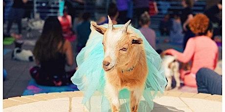 Boozy Goat Yoga! tickets