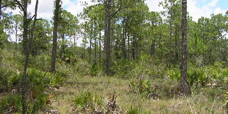 EcoWalk: Unique Preserves of Sarasota County - Sleeping Turtles South tickets