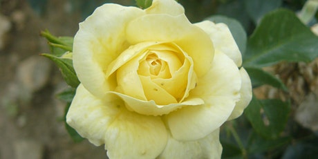 Heritage Rose Day Community Gardening Day tickets
