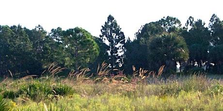 EcoWalk: Unique Preserves of Sarasota County - Scherer Thaxton Preserve tickets