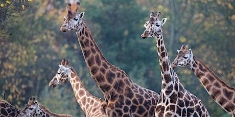 Giraffe Habitat Challenge (children aged 9-12 years) with Dublin Zoo tickets
