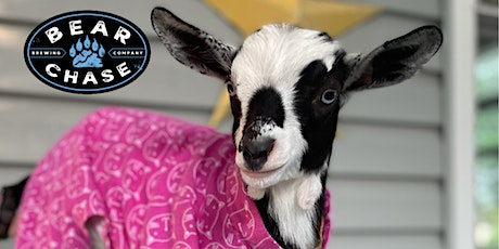 Goat Yoga Halloween Costume Party at Bear Chase Brewing Co. tickets