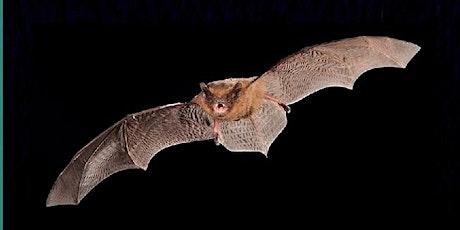 Three Crosses Bat Walk tickets