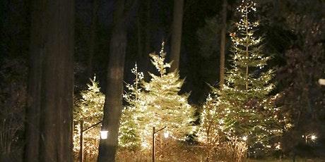 Night Lights – December 17 tickets