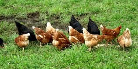 Four County 4-H Poultry Showmanship Clinic and Project Record Book Workshop tickets