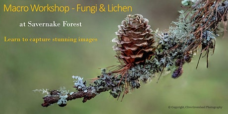Macro Photography Workshop - Fungi & Lichen at Savernake Forest tickets
