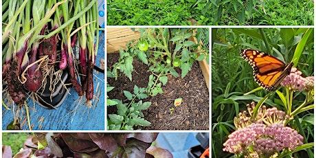 Pollinator and Vegetable Garden Series for Children tickets