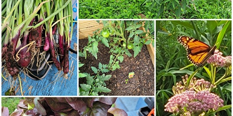 Pollinator and Vegetable Gardens Series for Children tickets