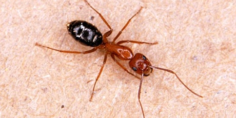 Understanding Ant Biology and Control tickets