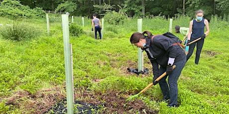 Native Tree Planting at Marshlands Conservancy tickets