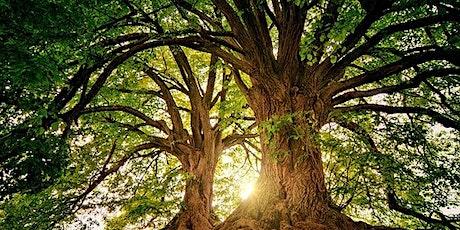 AURORA ARBOREA.  Monologhi di alberi e musica per foresta biglietti