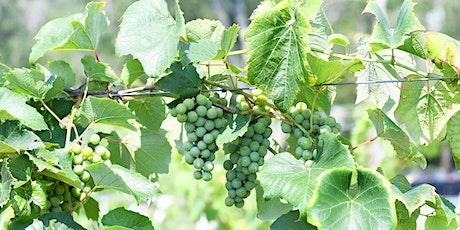 Renault's Grape Harvest Social tickets