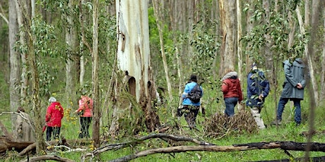 Wine and Wildflower Walk at Sinclairs Gully tickets