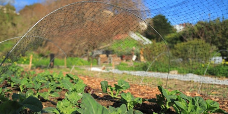 Organic Fall Vegetable Gardening & Cover Crops tickets