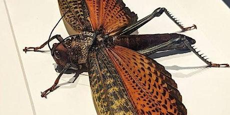 Giant Locust Pinning tickets