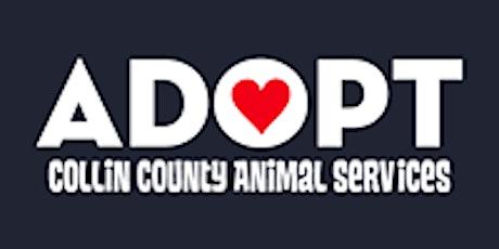 CCAS Volunteer Dog 101 tickets