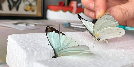 Butterfly Pinning tickets