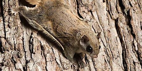 Flying Squirrel Taxidermy tickets