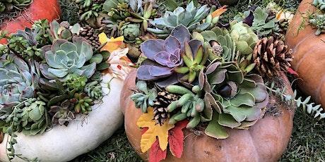 Succulent Pumpkin Workshop Sip 'n' Succs tickets
