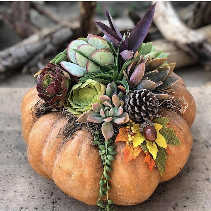 Succulent Pumpkin Workshop Sip 'n' Succs image