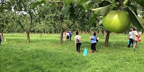 Fruitpluk - Gemeentelijke Fruitboomgaard 'de Uithof' Den Haag (Escamp) tickets