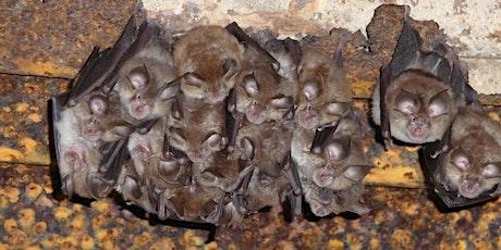 Mes colocataires les chauves-souris billets
