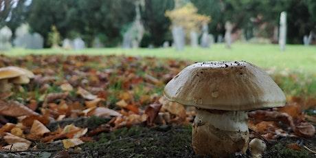 Learn to Identify & Record Fungi - Bromfield tickets