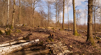 Members' Event: Autumn Walk at Queenswood tickets