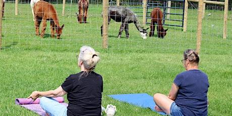 Fall Yoga & Alpaca Experience tickets