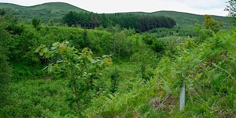 Borders Forest Trust - 25th Anniversary.Walk 4: Corehead & Devil's Beef Tub tickets