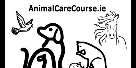 Dog Behaviour Workshop for Kids with Hannah Flew tickets