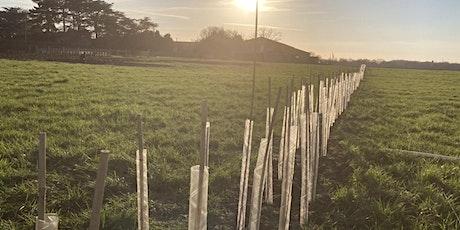 National Tree Planting Week at Bidlea Dairy tickets