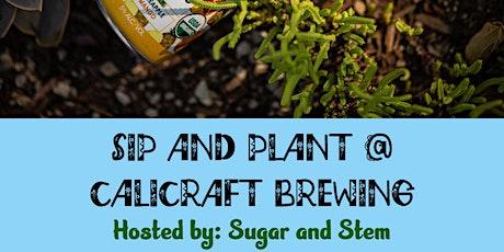 Sip and Plant: Bottle Terrarium Workshop tickets