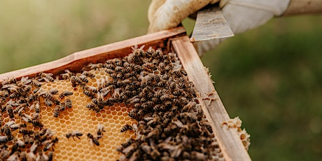 Beekeeping 102: Beehive Building and Introduction to Carpentry tickets