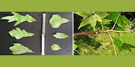Basics of Plant Identification tickets