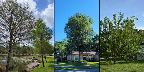 Native Trees of Central Florida tickets
