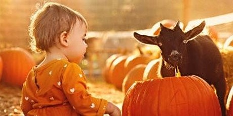 Pumpkin Carving with Goats!  Family Farm tour too!!! tickets