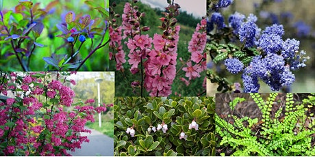 Natural Yard Care: Landscaping with Native Plants of the Pacific Northwest tickets
