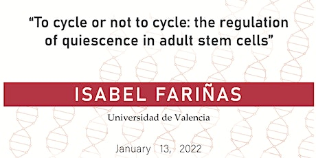 To cycle or not to cycle: the regulation of quiescence in adult stem cells entradas